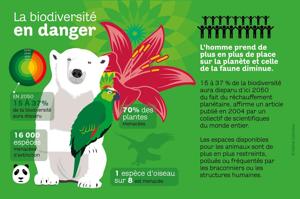 infographie sur la biodiversité